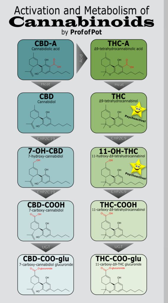 If you're looking for the next level of nerdy explanations,    check out this blog from The Prof of Pot,    who does a great job of going into the details from a more scientific angle.
