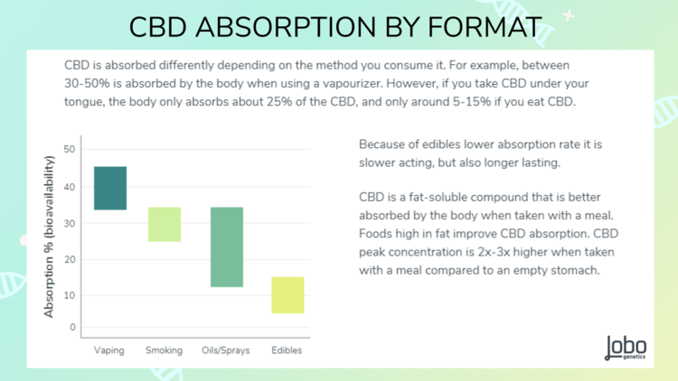 Lobo Genetics CBD Metabolism report    shows the bioavailability of CBD by format   .    4,      5       How much of the CBD that is absorbed by the body determines the position of the (green-yellow) bar on the Y-axis. How long it lasts in the body determines the length of the bar.