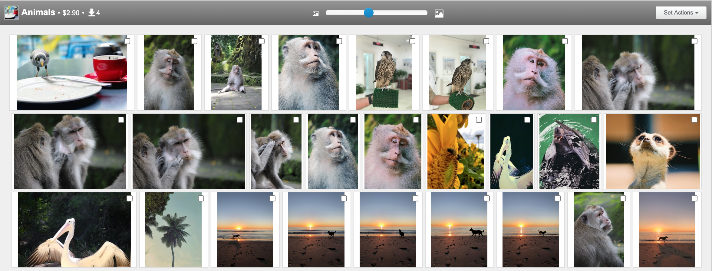 Animal stock photography on Shutterstock conversion.png