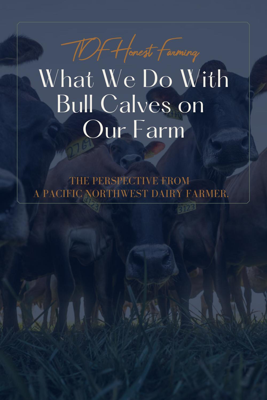 必威体育最新1.7.1.版本TDF Honest Farming (1).png