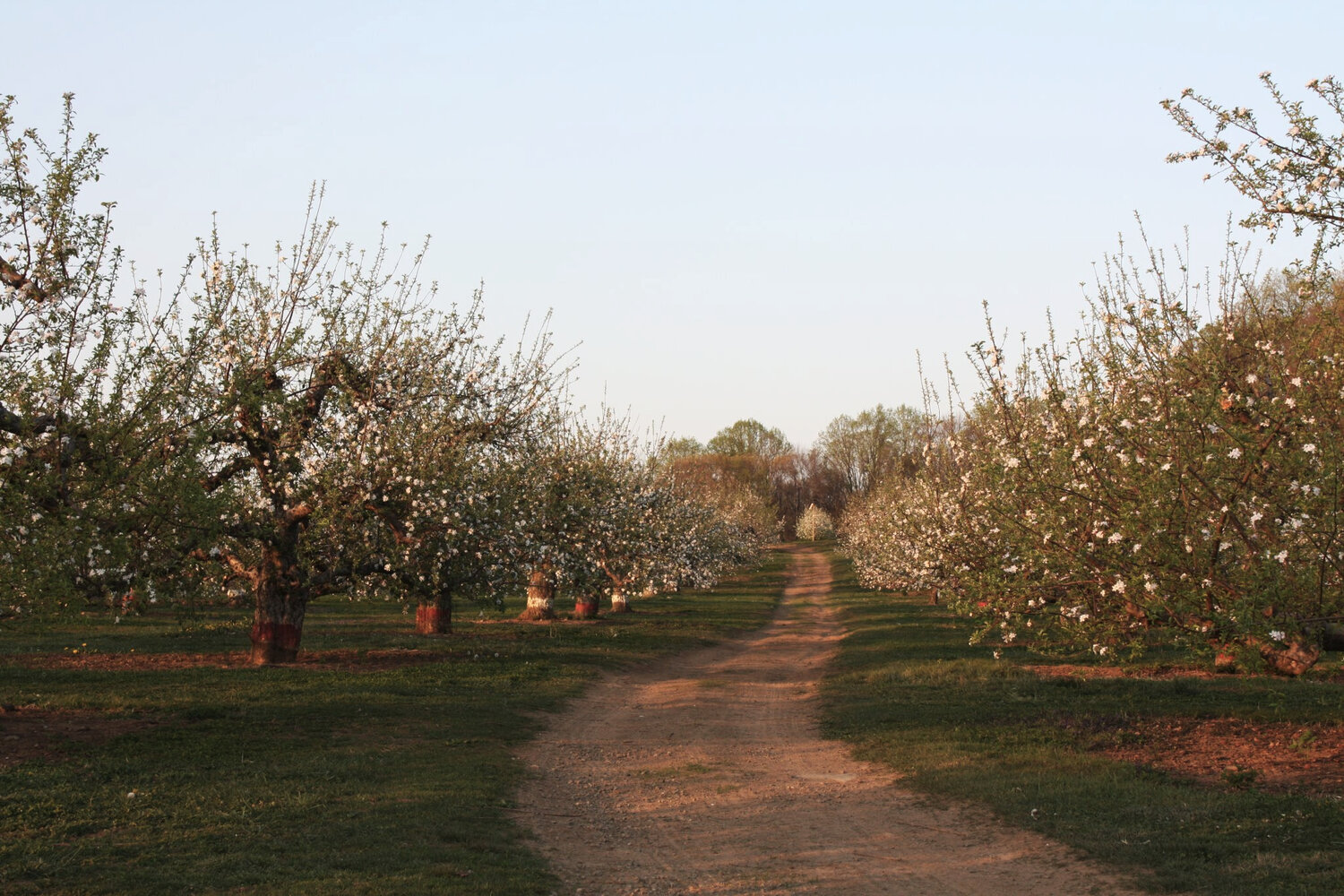 orchard+in+bloom.jpg