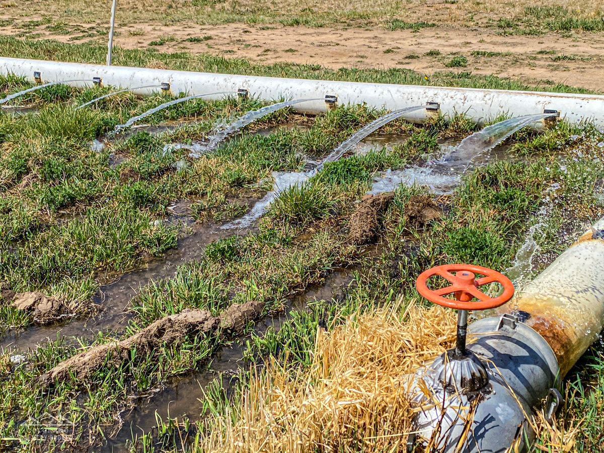 Irrigation Method in Western Colorado-2.jpeg