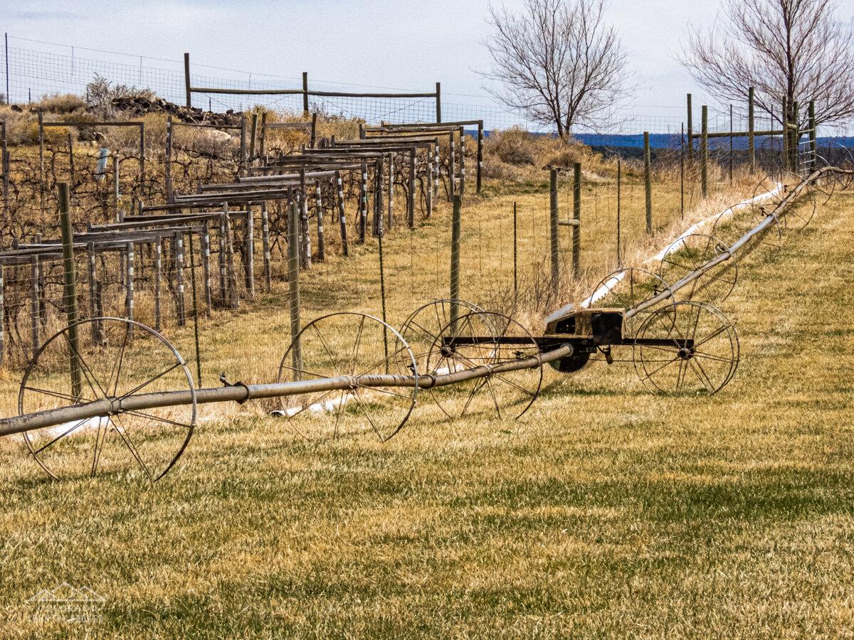 Irrigation Method in Western Colorado-1.jpeg