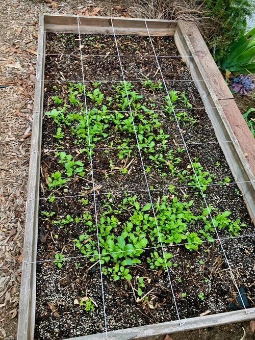 superfarm_gardencompost - 1.jpeg