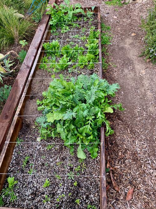 superfarm_gardencompost - 4.jpeg