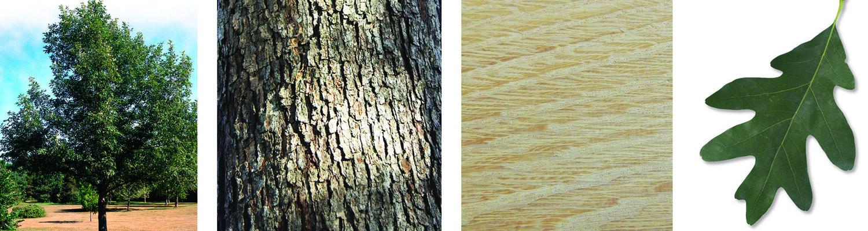 arbres-produits-scieriedionetfils-cheneblanc6.jpg