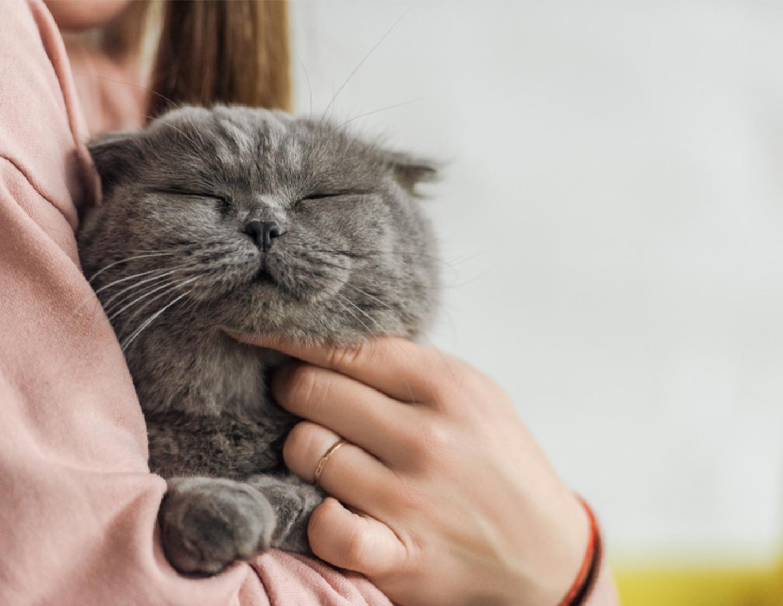 Grey-Cat-1440x1114.png