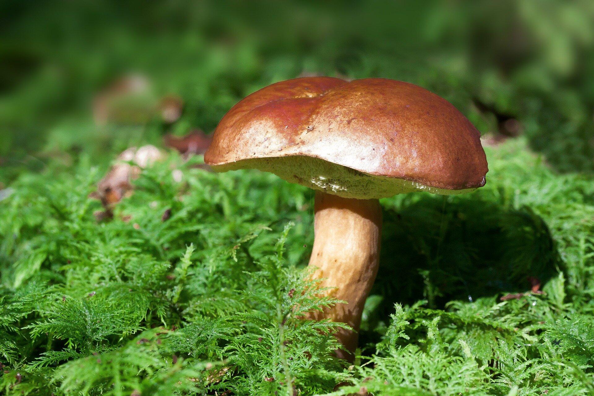mushroom-448866_1920.jpg