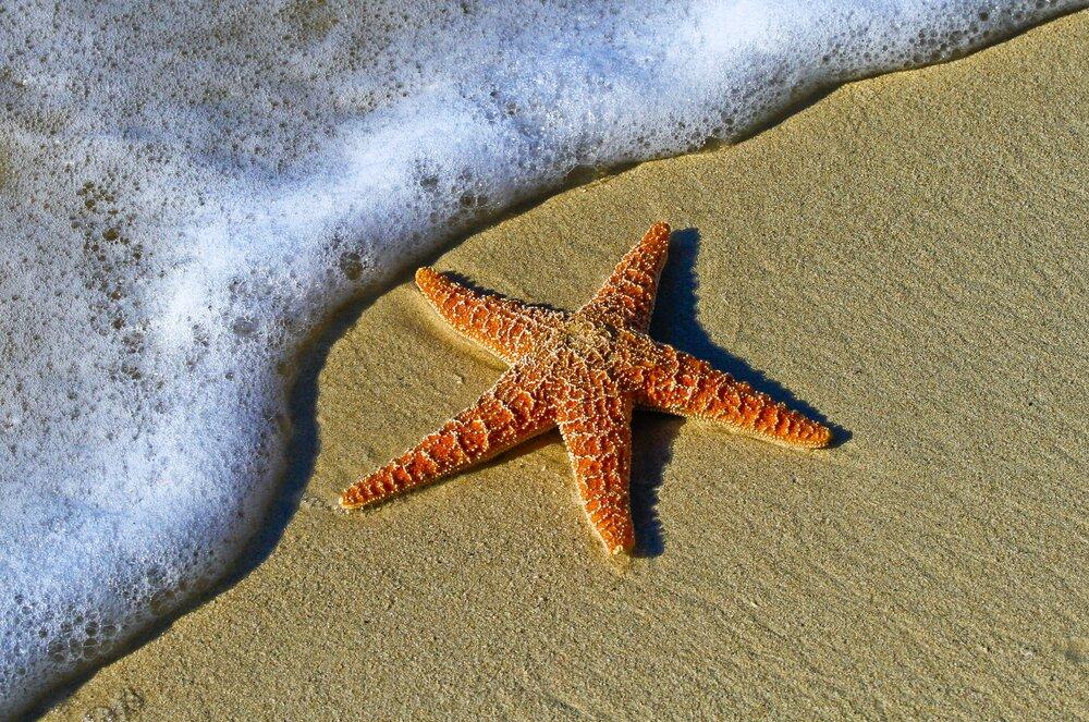 Starfish at Myrtle Beach