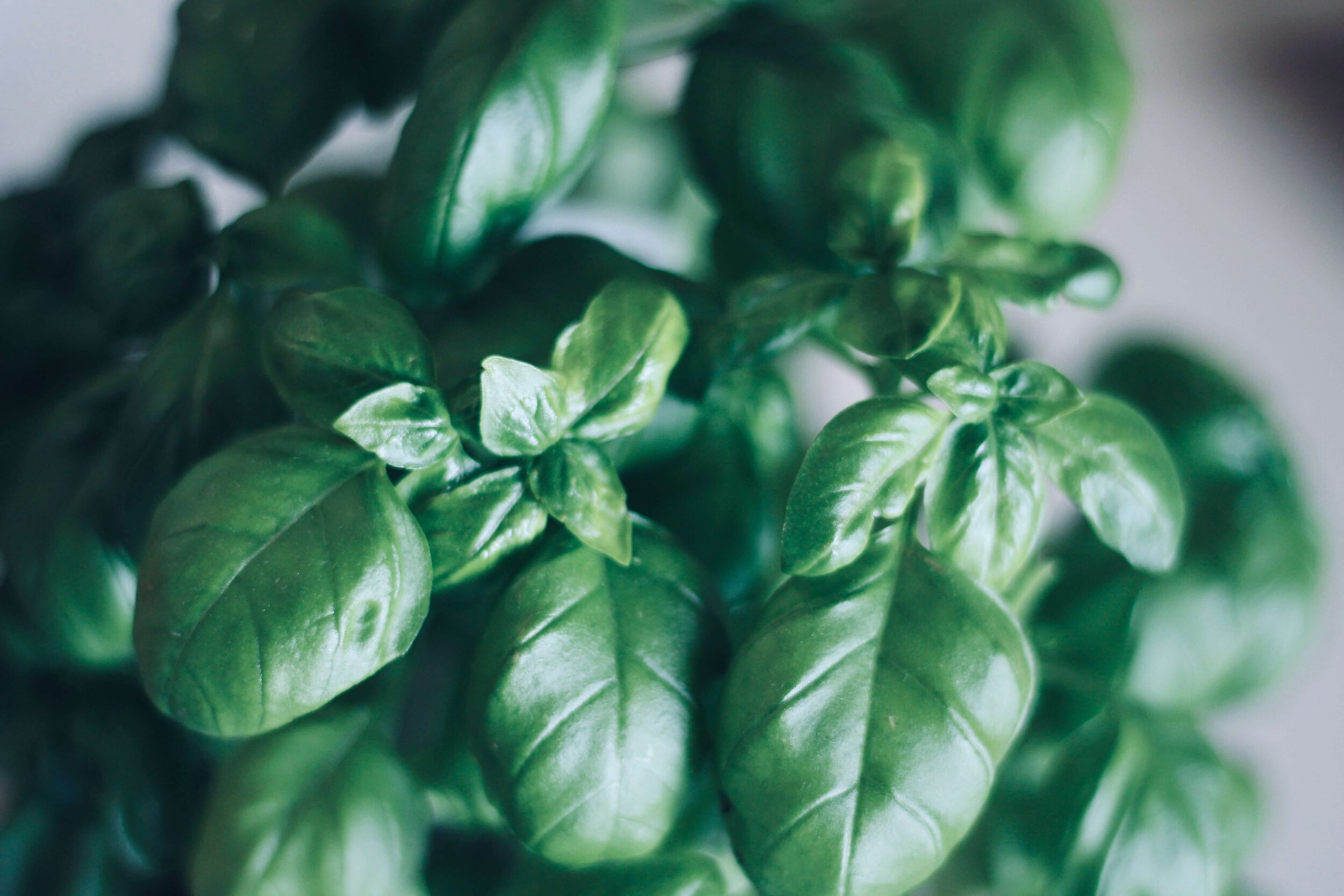 calcium rich basil and herbs
