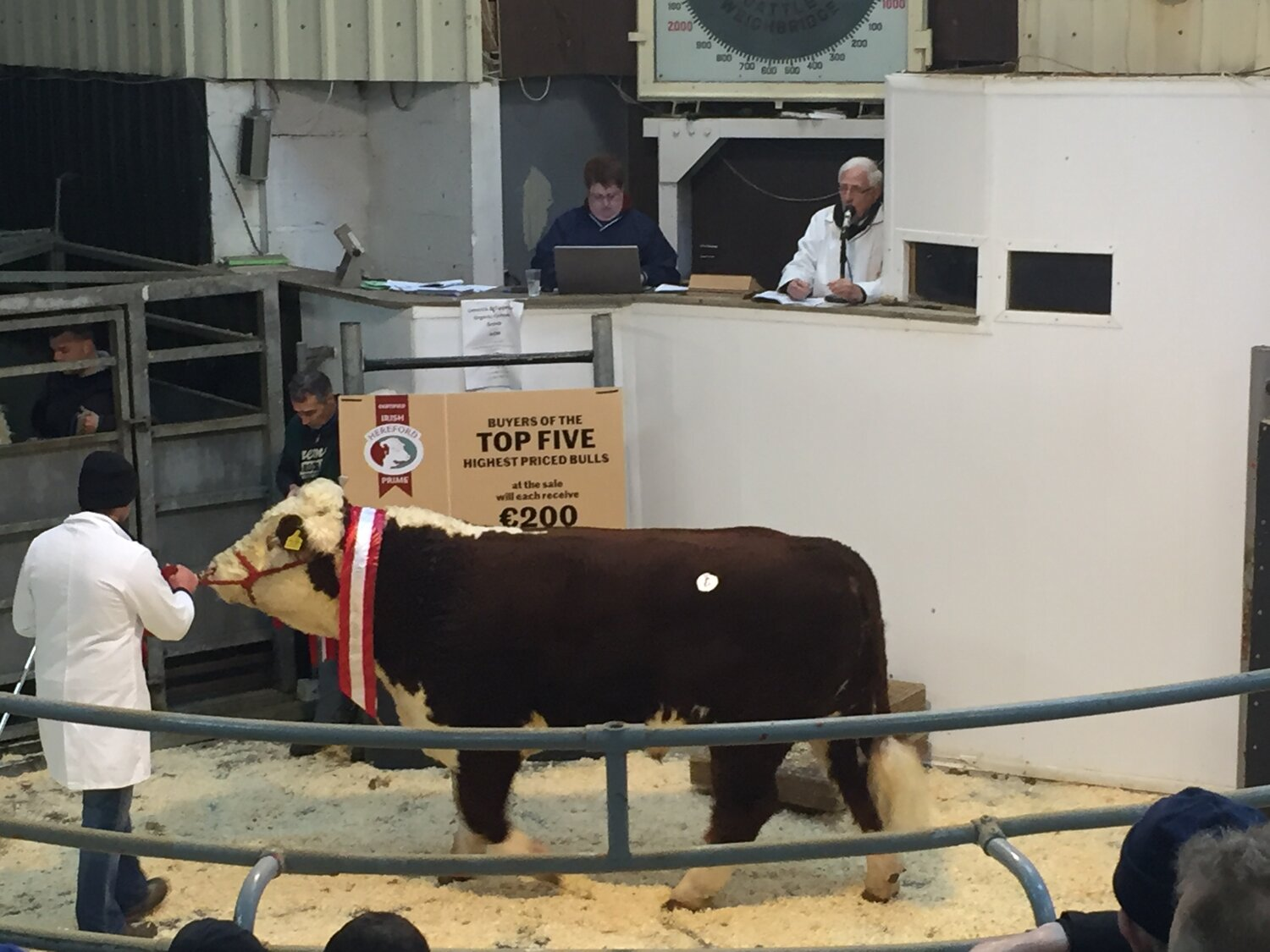 Pictured above is the overall Hereford Champion bull at GVM Kilmallock Show & Sale 2019, Butlerstown Ollie owned by Shane O'Driscoll of Bandon, Co. Cork. Sired by Gageboro Morgan and is a 5 star Terminal Bull which sold for €3,300.