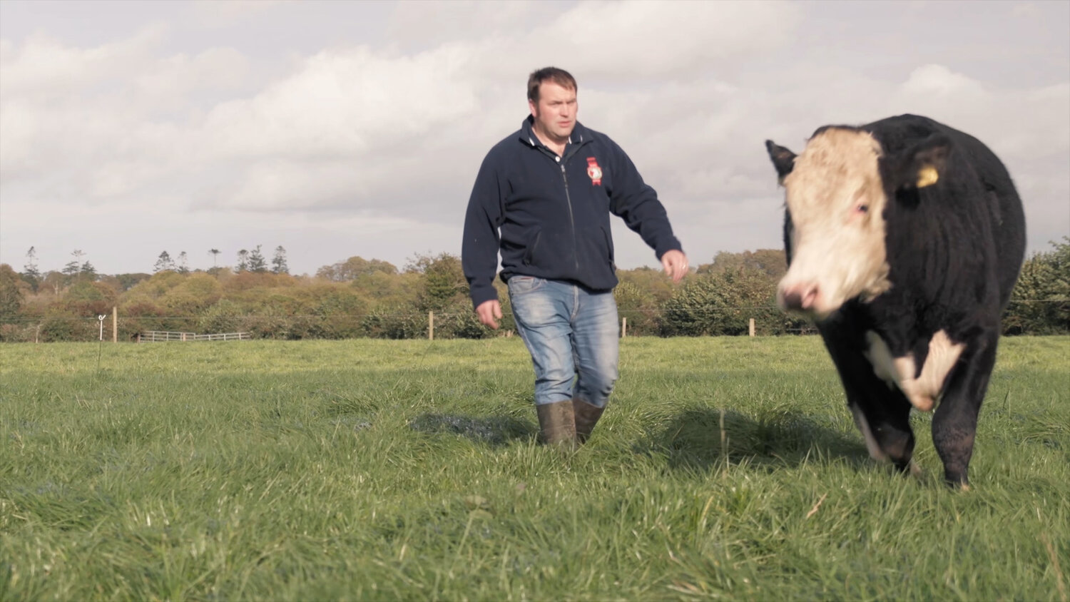 Richard Milligan and a Hereford steer on Autumn grass