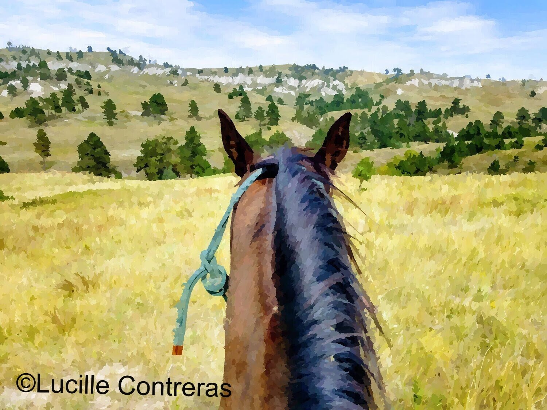 View From Midnight Run's Back, Part of the Horse Spirit Society https://horsespiritsociety.org/
