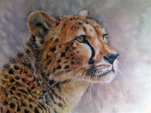 cheetah-portrait.jpg