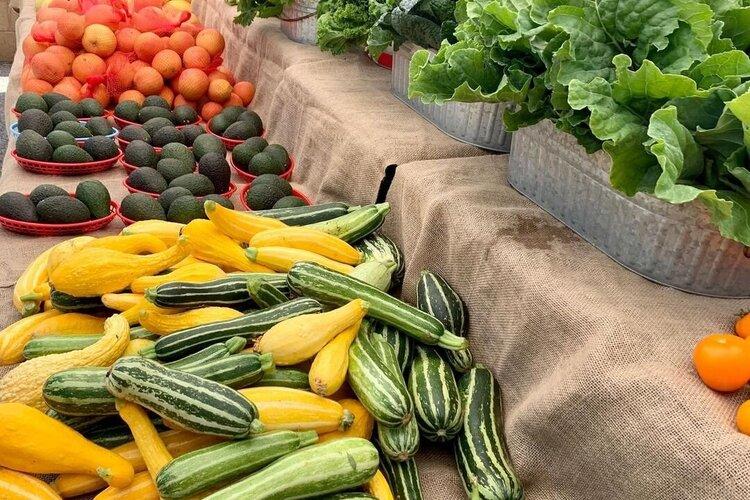 delmar_farmersmarket_121700485_647262972625539_2799156699318367378_n.jpg
