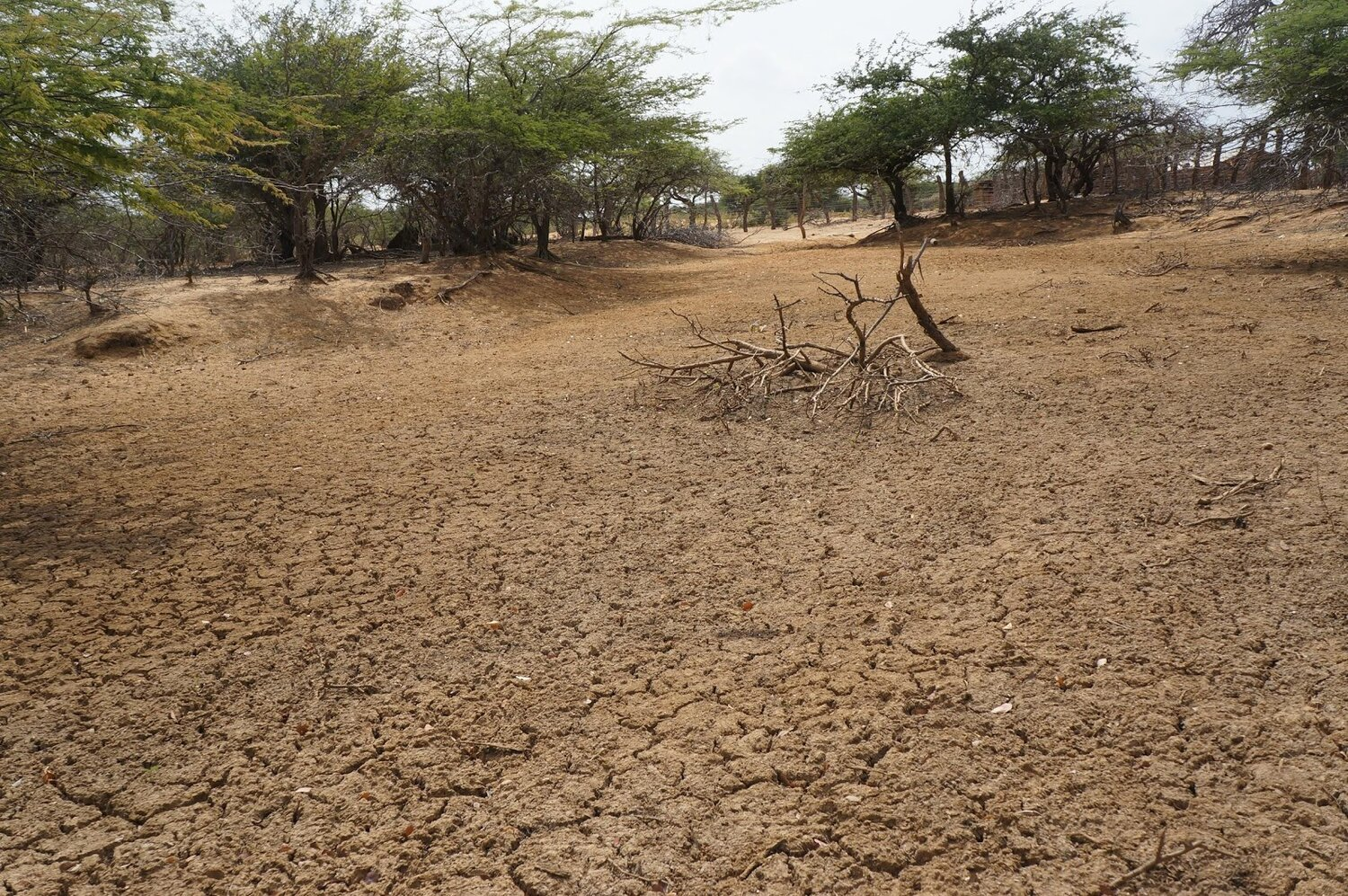 """A dried up """"Jaguey"""" caused by a prolonged drought. La Guajira, Colomba. Photo by V.Circe."""
