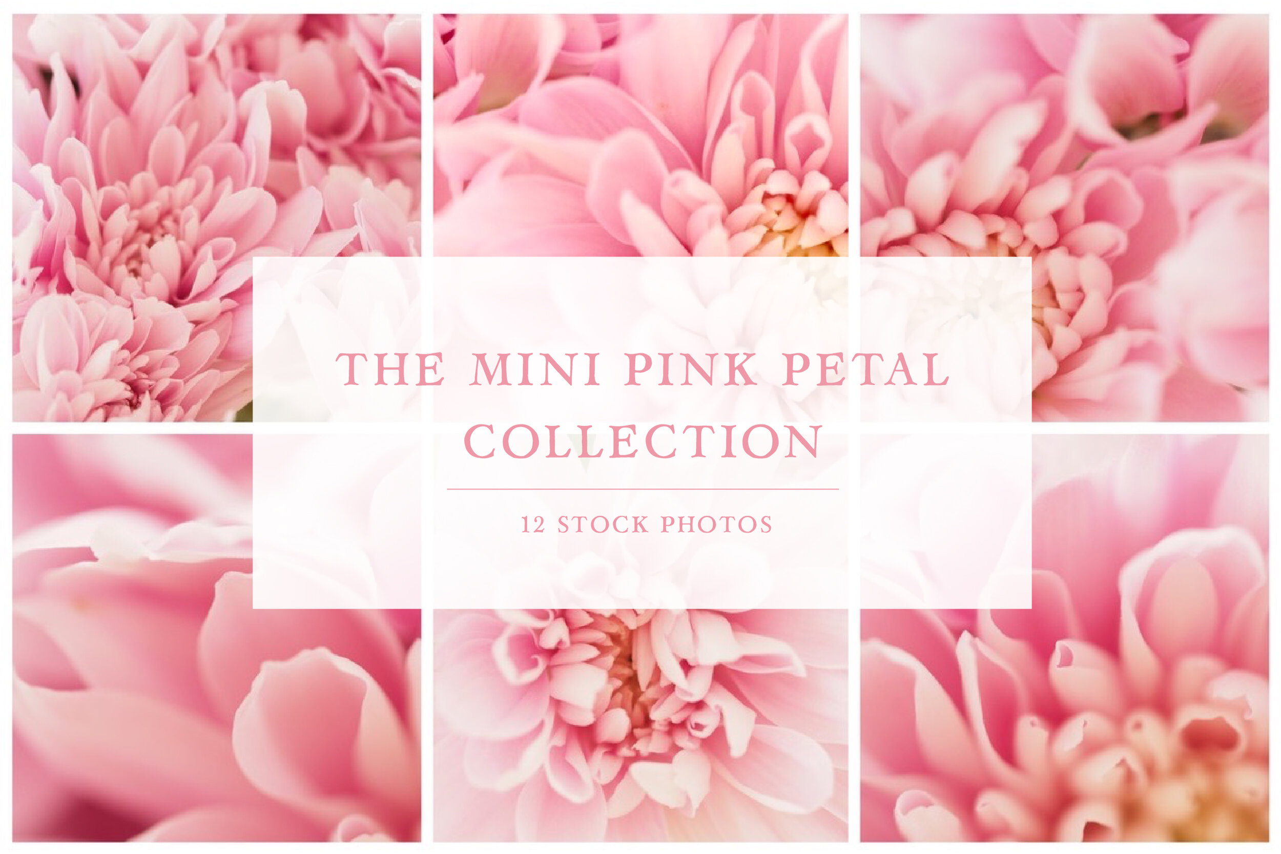 The Pink Petals Collection — Jess Bailey