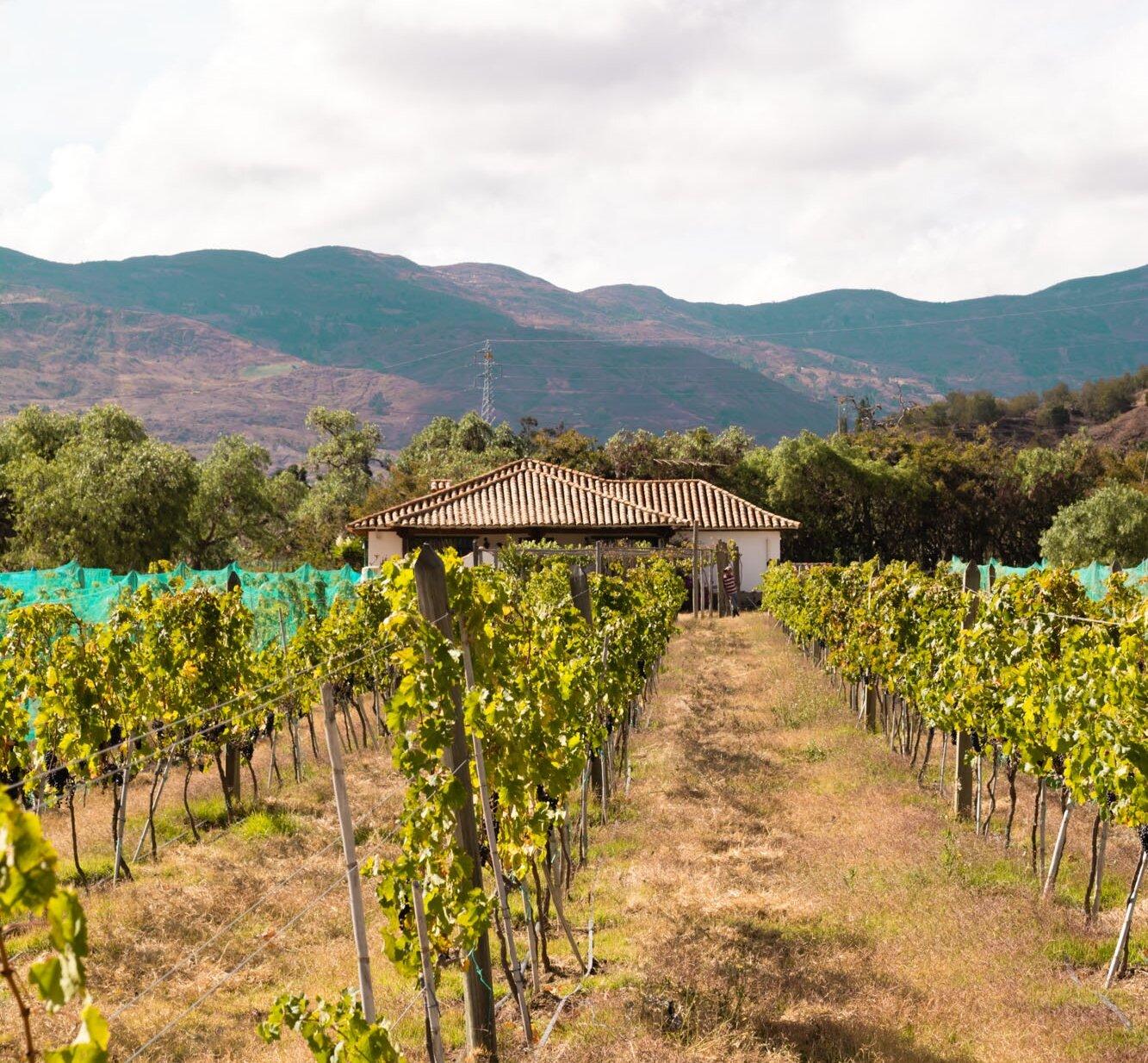 Viñedo Umaña Dajud - Villa de Leyva