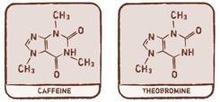 caffeine and theobromine structure