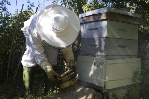 the bee keepers daughter