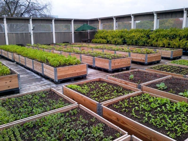 东帝构大学驻多伦多研究所的绿色屋顶作为与非营利组织食品合作的社会企业的一部分。屋顶提供有价值的教育工具,并在2014年筹集了超过18,000美元的收入。照片:Footshare