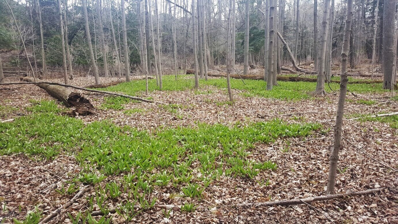 春天的短暂物慢慢地从土壤中探出头来,利用过滤在光秃秃的树枝上的阳光。重游绿色空间给了你一个难得的机会来观看它蓬勃发展。