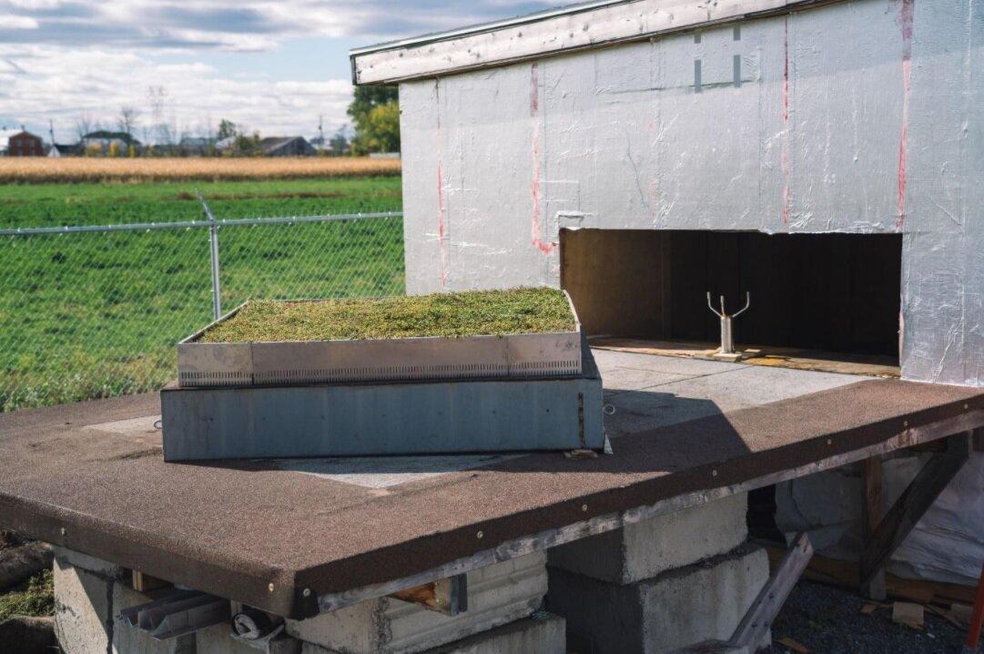 植被屋顶装配的风力流动测试。样品(1.8米×1.8m)在45°到风流量的角度成角度,以获得最大的影响。照片:Karen Liu博士