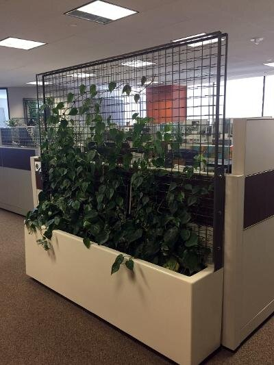 Greenscreen®玻璃纤维种植和格架面板安装在室内