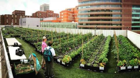 在5月11日的城市食品生产虚拟研讨会上了解波士顿医疗中心和其他创新城市农业项目。图片:2019年GRHC奖得主:恢复绿色屋顶