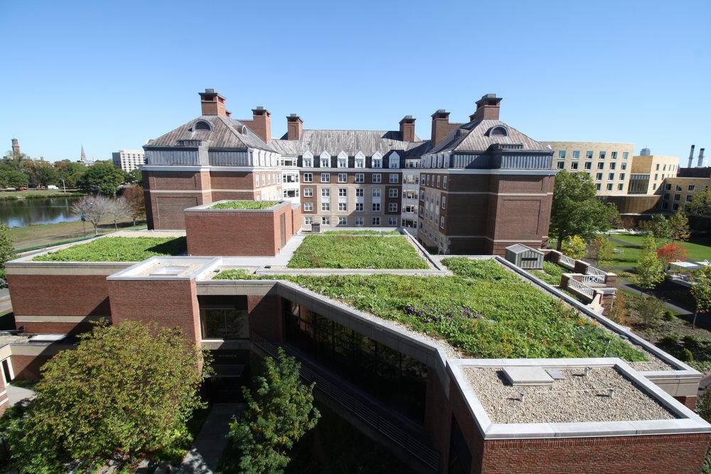 生活建筑绩效工具认证的银色屋顶草甸在哈佛商务学校建筑,恢复绿色屋顶