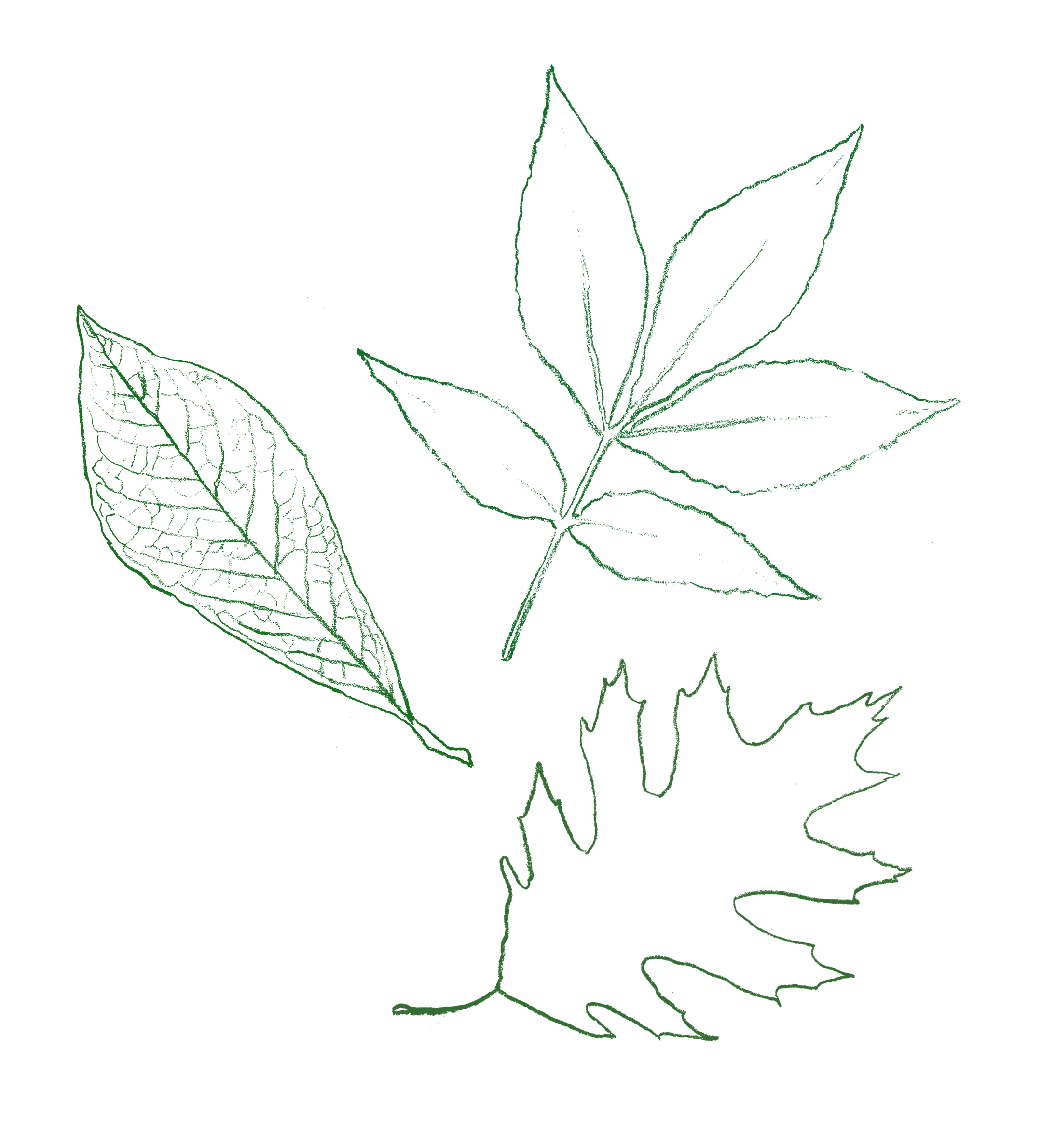 leaves_2.png