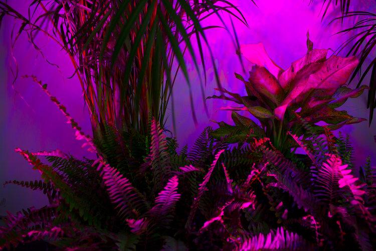 image from Sam Nestor's Arcadia - purple and pink lighting on foliage