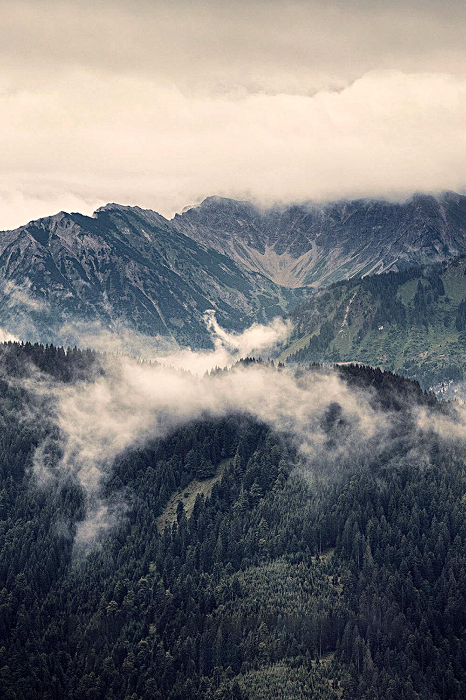 阿迪朗達克云杉面板 - 或稱東部紅云杉,因其紅寶石般的色澤而得此名,此種云杉相當稀有,只生長于紐約東北部的阿迪朗達克山脈,是名副其實的云杉之王,通常用于制造高端民謠吉他。其紋路較寬,共振幅度較大,質量相對較重,硬度高,制成的吉他聲音會越來越迷人T10使用阿迪朗達克云杉作為面板的制作材料