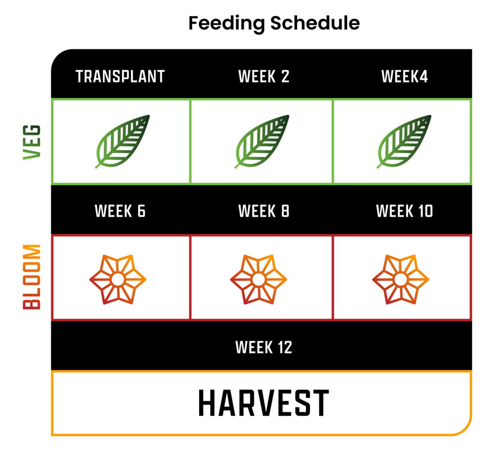 feeding schedule chart.png