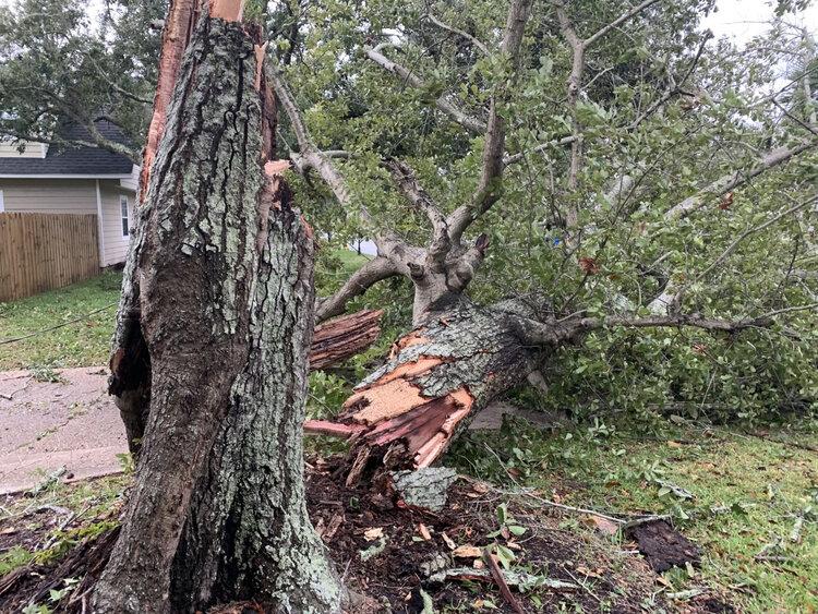 tree damage.jpeg